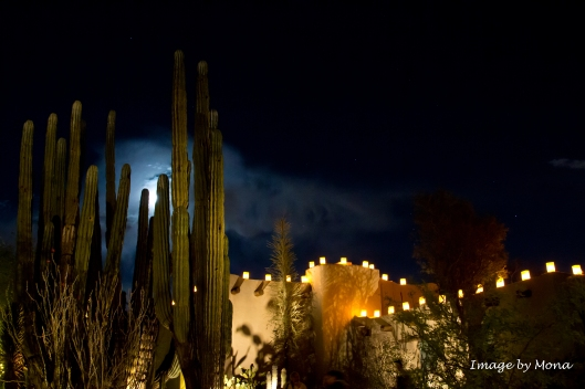 The powerful saguaro appears to guard the adobe house decorated with luminaries.