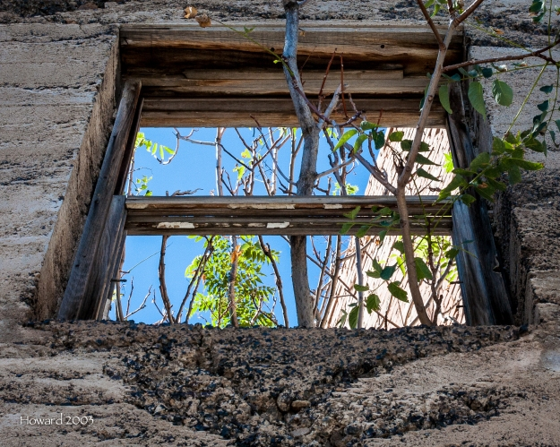 See the trees growing through the window...one behind and one in front?
