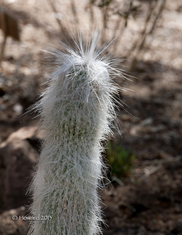 I always giggle when I see this cactus.