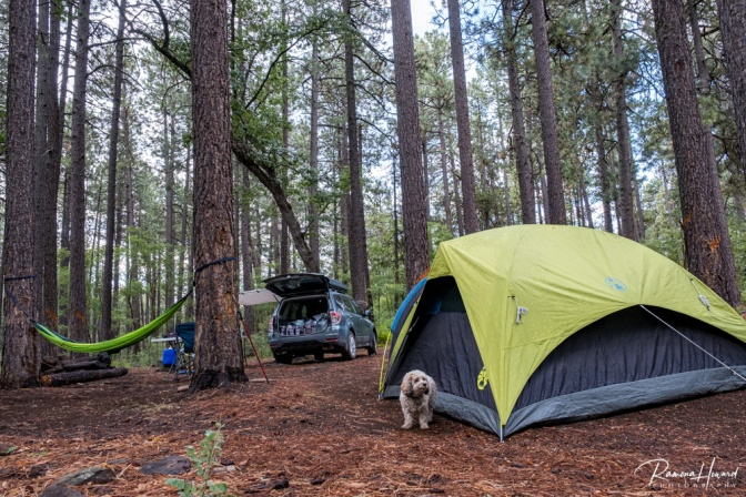 One of our recent campsites